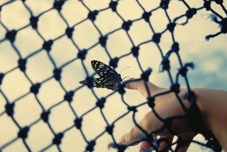 Фото Бабочка на решётке (© Юки-тян), добавлено: 12.11.2010 14:59