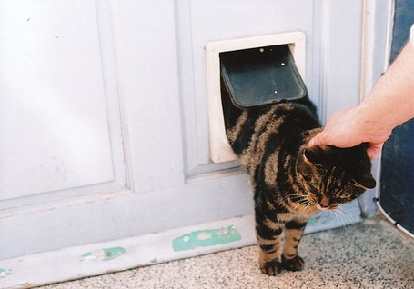 ���� Cat (� ���-���), ���������: 16.11.2010 15:19