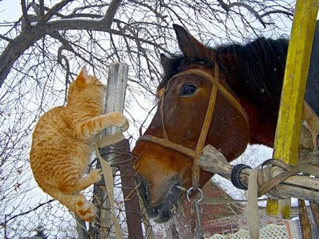 Фото Рыжий кот на заборе возле гнедой лошади