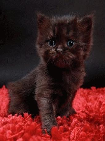 Фото Смешной котёнок (© Anatol), добавлено: 17.11.2010 13:40
