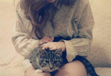 Фото Девушка гладит кошку (© Юки-тян), добавлено: 18.11.2010 07:19