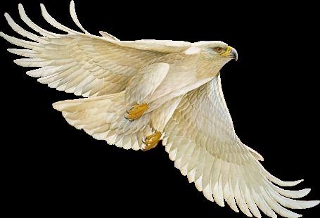 Фото Белый орёл