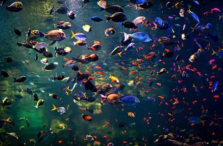 Фото Рыбы (© Юки-тян), добавлено: 24.11.2010 15:27