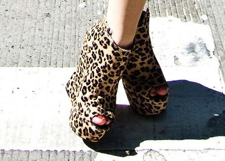 Фото Леопардовый окрас (© Юки-тян), добавлено: 26.11.2010 07:48