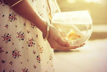 Фото Девушка с золотой рыбкой (© Юки-тян), добавлено: 27.11.2010 15:55