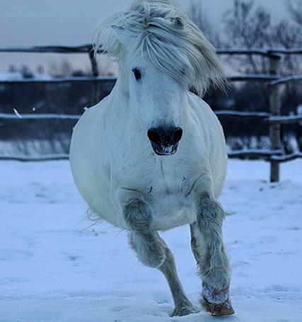 Фото Белый конь в загоне
