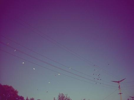 Фото Вечернее небо (© Юки-тян), добавлено: 05.12.2010 16:38