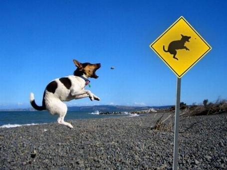 Фото Собачка на пляже в точности повторяет знак