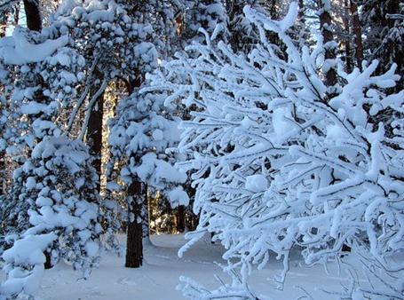 Фото Зимний лес (© Штушка), добавлено: 13.12.2010 23:08