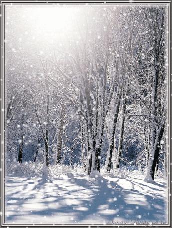 Фото Красивый заснеженный лес (© Штушка), добавлено: 13.12.2010 23:11