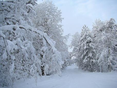 Фото Лес в снегу (© Штушка), добавлено: 13.12.2010 23:14