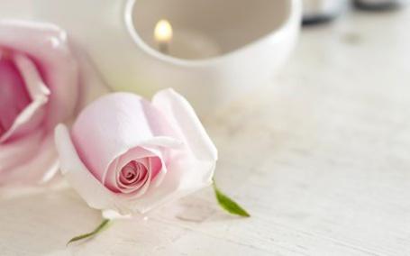 Фото Розовая роза (© Штушка), добавлено: 29.12.2010 22:12