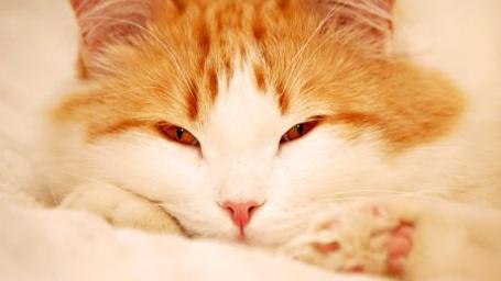 Фото Рыжий кот (© Штушка), добавлено: 29.12.2010 22:26