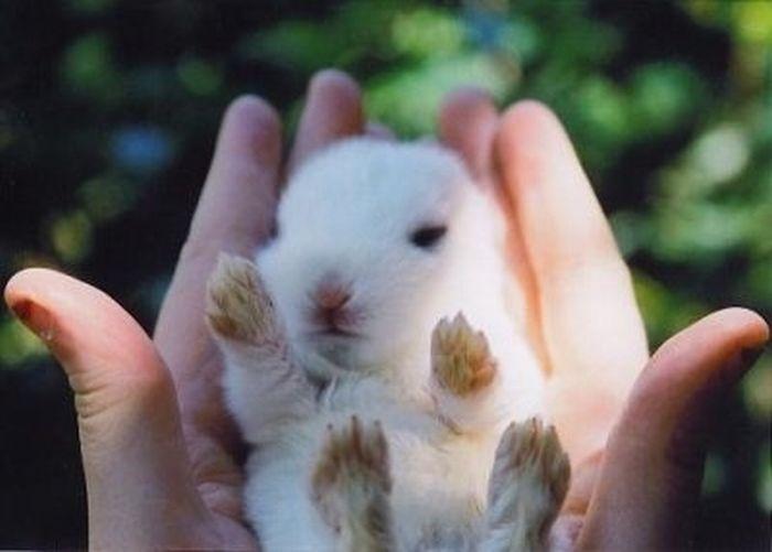 Фото маленький белый кролик в руках