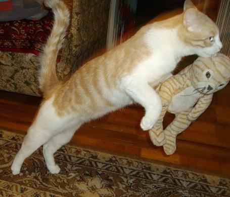 Фото Кошка прыгает с игрушкой (© Штушка), добавлено: 03.01.2011 00:50
