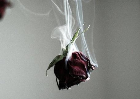 Фото Роза в дыму (© Штушка), добавлено: 05.01.2011 20:38