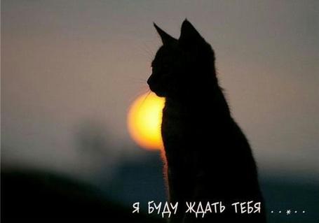 ���� � ���� ����� ����... (� Anatol), ���������: 06.01.2011 18:43