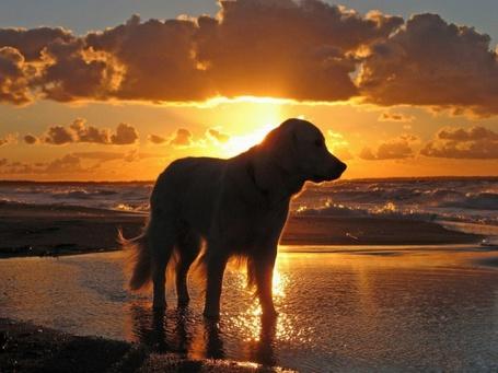 Фото Собака на берегу моря