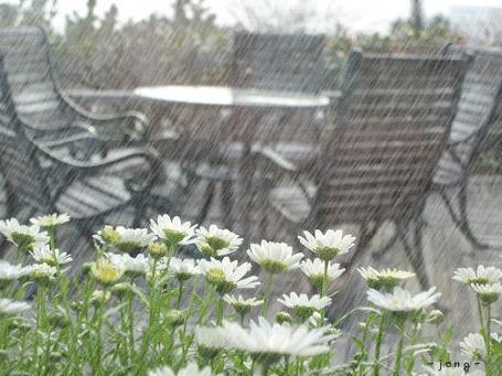 Фото В саду идет дождь (© Electraa), добавлено: 14.01.2011 14:11