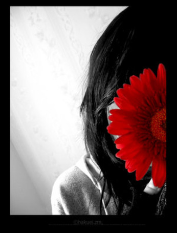 Фото Девушка спряталась за красным цветком (© Krista Zarubin), добавлено: 14.01.2011 16:31