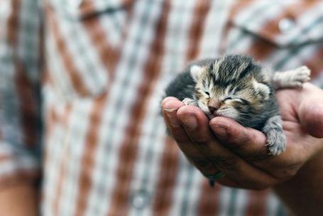 Фото Котёнок спит на руке