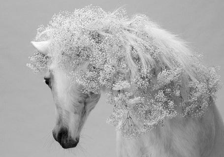 Фото Цветы вплетены лошади в гриву