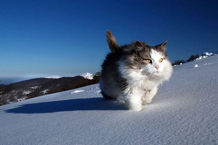 Дело было в новый год шел по снегу старый кот