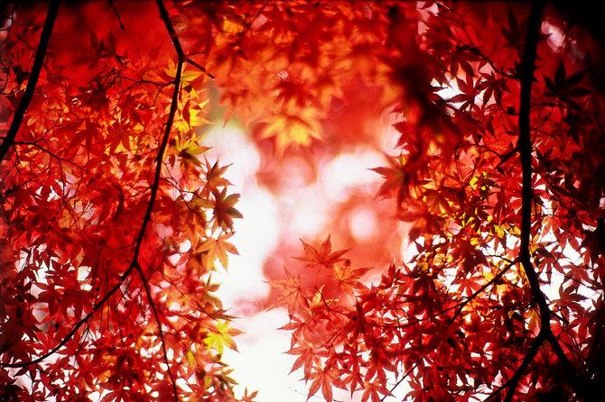 Фото Красные листики