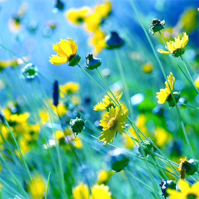 Тэги красивые природа цветы