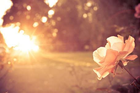 Фото Цветок (© Electraa), добавлено: 13.02.2011 19:50