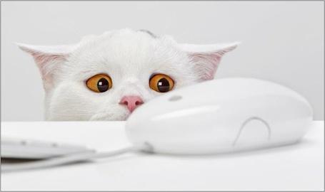 Фото Белый кот со страхом смотрит на мышь