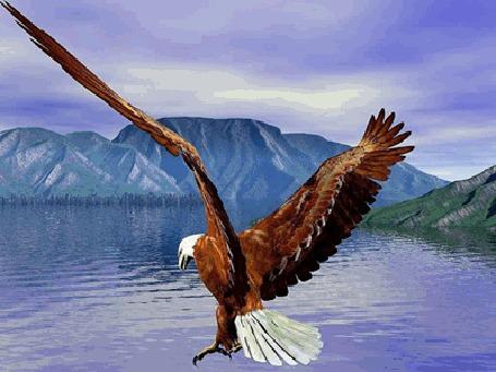 Фото Полёт орла над морем