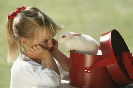 Фото Девочка смотрит на белого кролика
