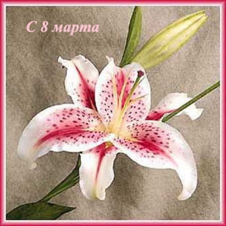 Поздравление, с 8 марта открытки с лилиями