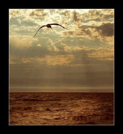 Фото чайка парит над морем