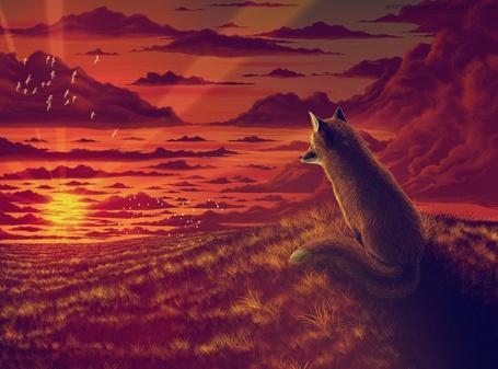 Фото лисица смотрит на закат (© Флориссия), добавлено: 19.02.2011 19:51