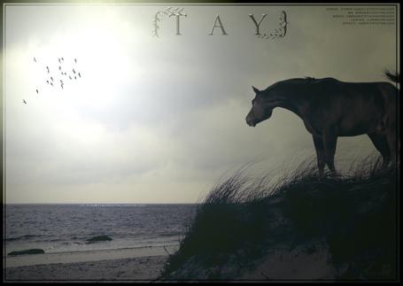 Фото одинокая лошадь смотрит на море (tay)