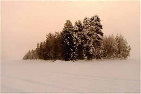 Фото Деревья посреди поля (© Штушка), добавлено: 25.02.2011 17:20
