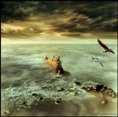 Фото полёт над морем (© Флориссия), добавлено: 01.02.2011 19:22