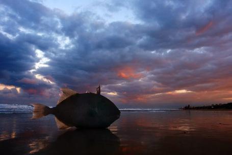 Фото Рыбка на пляже (© Radieschen), добавлено: 01.02.2011 20:35
