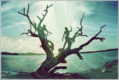 Фото девушки на сухом дереве (© Флориссия), добавлено: 03.02.2011 19:25