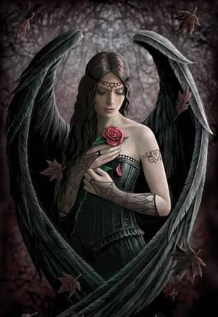 Фото Тёмный ангел с розой