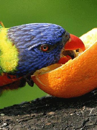 Фото Обед у попугая
