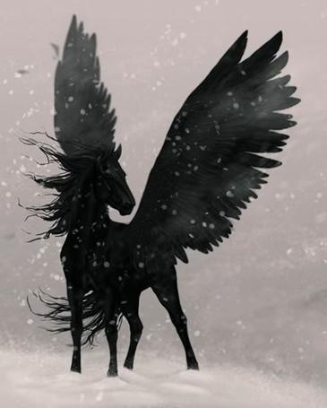Фото Черный пегас