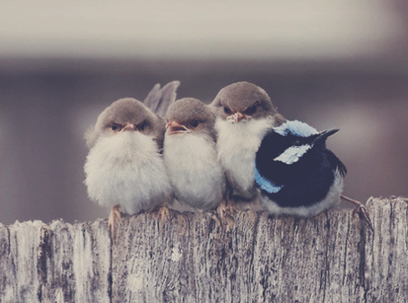 Фото Милые птички на заборе