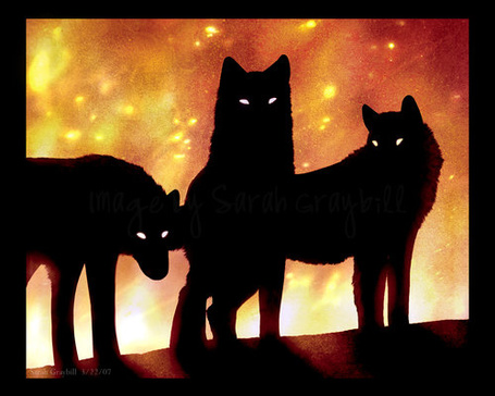 Фото Волки (© ColniwKo), добавлено: 09.02.2011 01:58