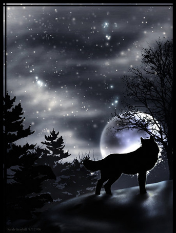 Фото Волк смотрит на луну (© ColniwKo), добавлено: 09.02.2011 11:49