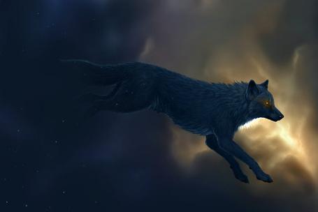 Фото Волк в прыжке (© ColniwKo), добавлено: 09.02.2011 17:34