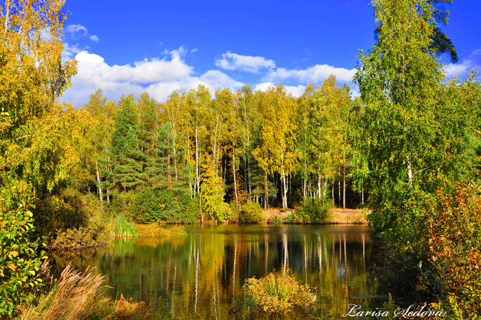 Фото осенний сказочный лес larisa sedova