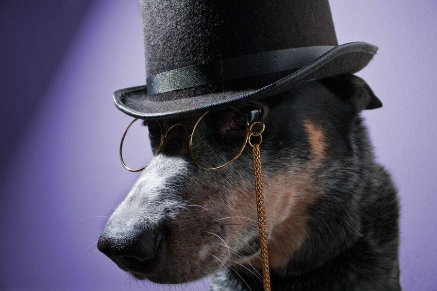собаки джентльмены картинки